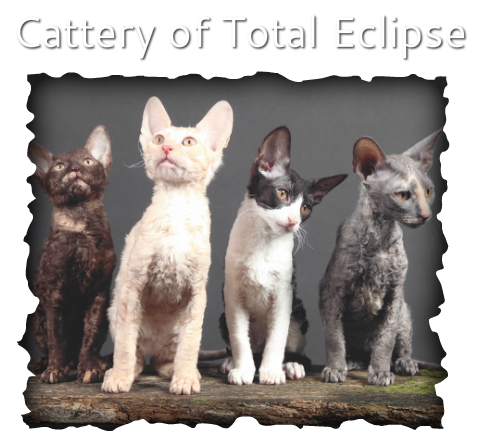 Cattery of Total Eclipse